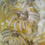 Kopretiny | tempera, na hrubém plátně