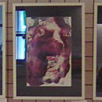 Y výstavy - Život růže, 3 obrazy | monotyp, olej